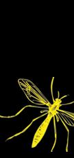 zanzara-verticale-nera